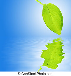 Hosta Leaf Beauty - Hosta leaf with reflection over rippled...