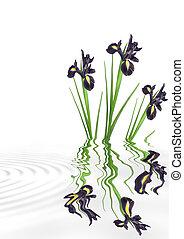 Black Iris Flower Beauty