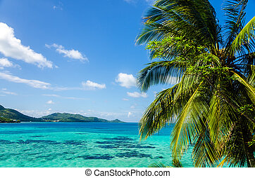 Palm Tree and Seascape - View of palm tree with Caribbean...