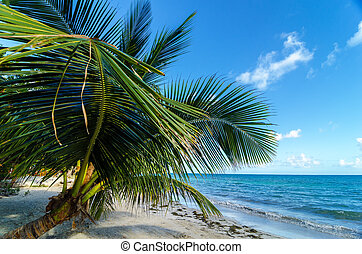 Small Palm Tree - A small palm tree extending over the beach...