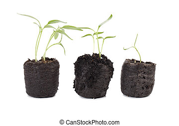 a soil pot with growing plants