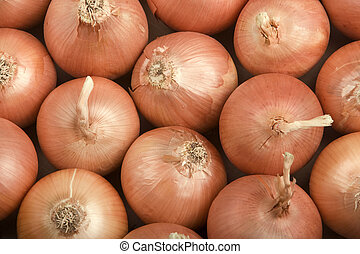 Onions Filling the Frame