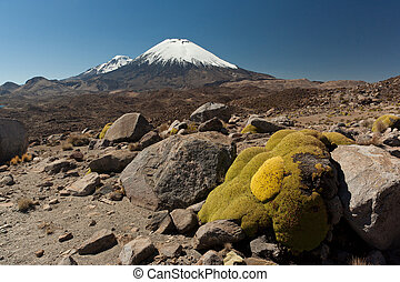 Volcano Parinacota - Snowcap Volcano at Chile- Bolivian...