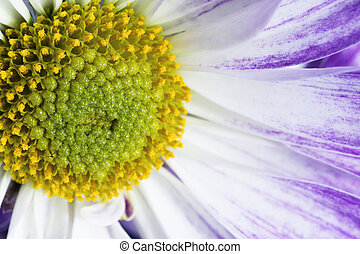 close up shot of pollens of a flower - Macro shot of pollens...