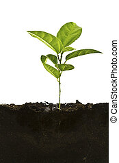 Plant above and the soil