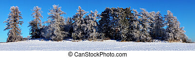 trees with rime frost - Panoramic view of trees with rime...