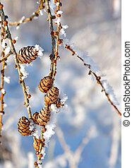 cones, neve, Cristais