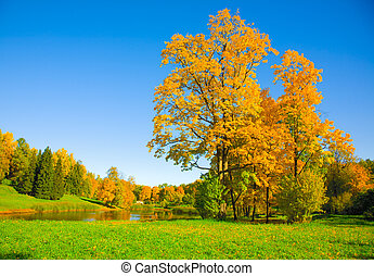 autumn landscape - the autumn landscape with yellow tree and...