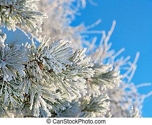 pino, agujas, nieve, Cristales