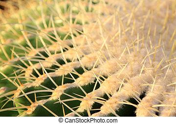cactus kind plant