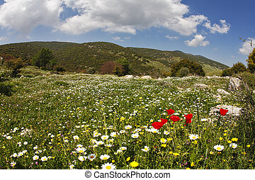 Hilly landscape. Spring at southern coast of Mediterranean...