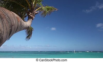 Palm tree at the ocean