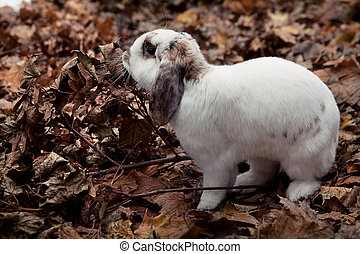 White cute rabbit over leaf's background - White and very...