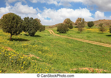 The rural dirt road, field and trees