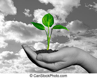 plant in  hand - plant in the hand on sky background