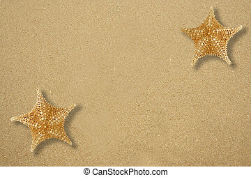 Two star fish on the sandy beach