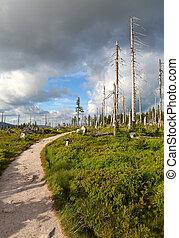 Mountain path in Krkonose - Czech republic