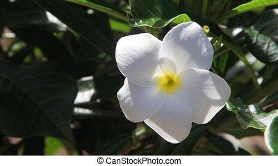 white flower on green bush