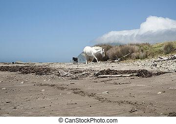 Horses on beach.