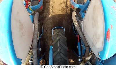 Planting maize for fodder or food,