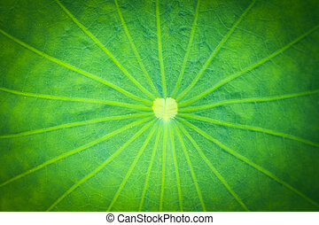 background Lotus leaf texture