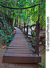 walks in Forest