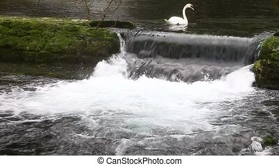 Stream and swan