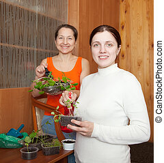 women with seedlings - Two women with various seedlings at...