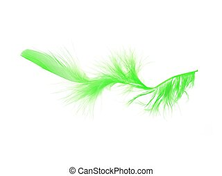 Feathers - Boa feathers isolated against a white background