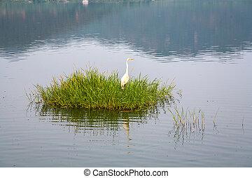stork at grass at the Man Sagar Lake. Jaipur, Rajasthan,...