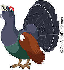 Wood grouse - Vector image of cartoon funny wood grouse