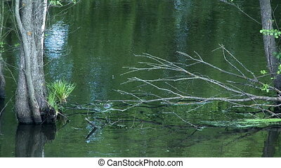Fragments of trees in water - Fragments of trees in green...