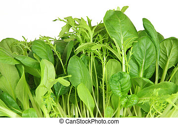 Salad Leaf Selection - Salad leaf selection of pak choi,...