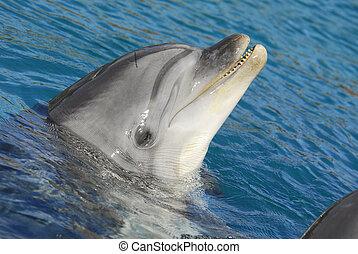 Dolphinarium - A Dolphinarium Eilat in the Israel
