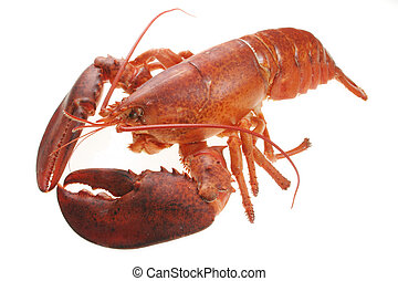 Lobster - A large red lobster over white background