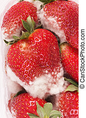 strawberries - Rotten strawberries