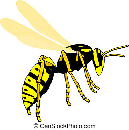 flying wasp - flying adult wasp, isolated vector...