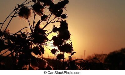 swamp flower - Swamp flower at backlight