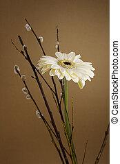 white herbera