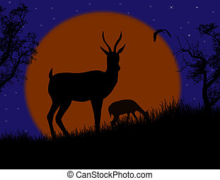 Gazelle couple in wild nature landscape at night, background...