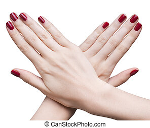 hands with red manicure - hands with woman's professional...