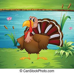 A turkey near the pond