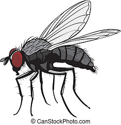 housefly - pest control - household insect pest