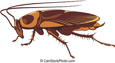 cockroach - pest control - household insect pest