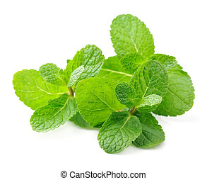 Mint leaf close up on a white background