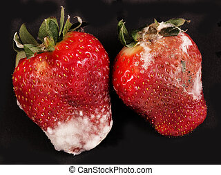strawberries - Rotten strawberries on a black background
