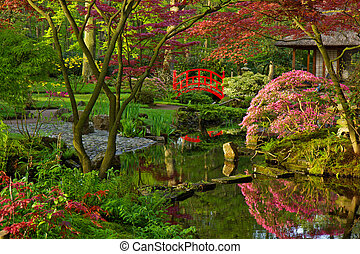 Japanese garden in spring - Japanese garden with red bridge...