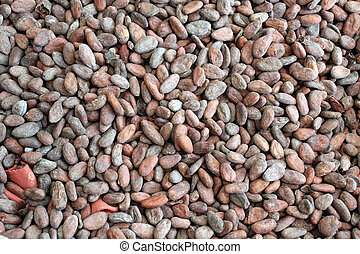 Raw cacao beans - Background with raw cacao beans