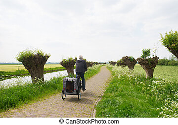 Row pollard willows and cow parsley - Dutch landscape in...