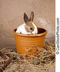 Shy rabbit in flowerpot